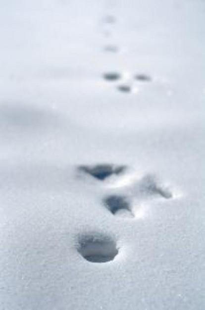 氷の上はなぜ滑る