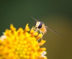 花粉ピーク時期